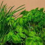 l'herbe de ciboulette contre les moustiques
