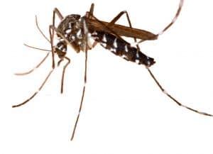 Répulsif Naturel Anti-Moustique